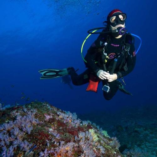 Scuba diving Koh Bon