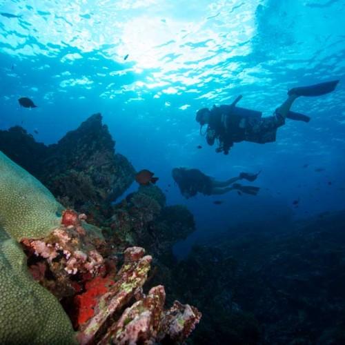 Diving Koh bon