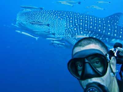 MV Hallelujah Liveaboard Trip Leader Dani Farrus and Whale Shark