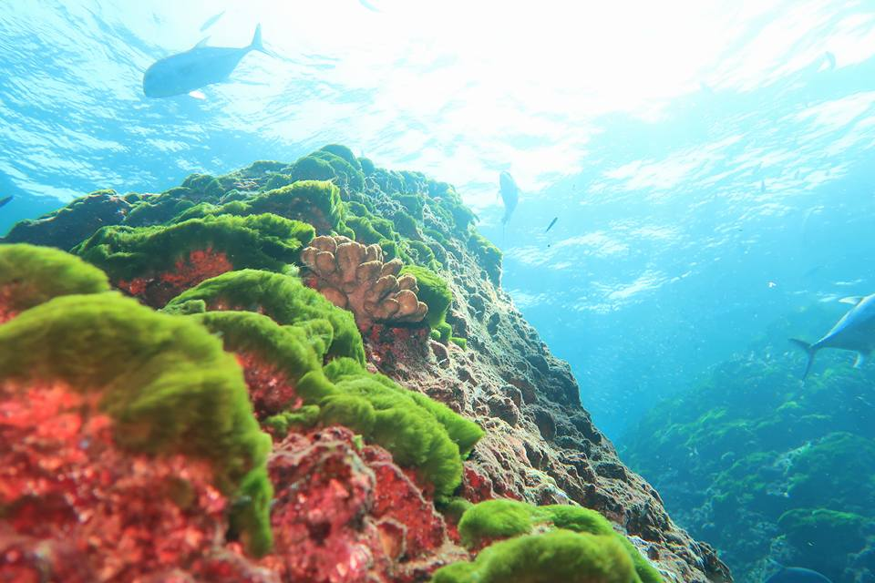 Richelieu rock, underwater fields, sunshine, fish