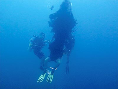 Big Blue divemasters removing fishing net from Richelieu Rock