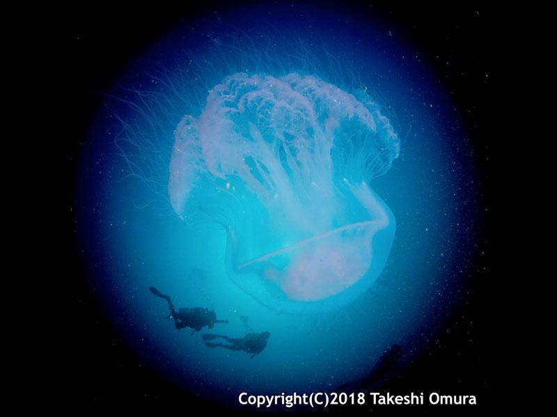 Space Dive. Jellyfish and divers at Koh Prathong Wreck