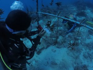 Nok measuring the coral growth.