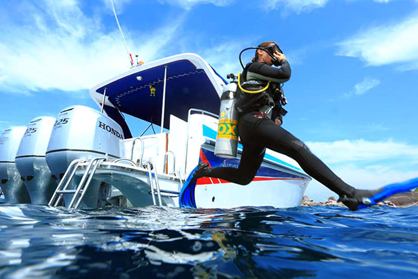 Big Blue Diving - Day Tours