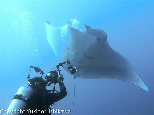On a Similan LIveaboard Diving with Manta Rays in the Similan Islands