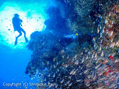 plongeur utilisant de l air enrichi Nitrox