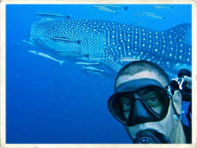MV Hallelujah Similan Liveaboard Trip Leader Dani Farrus and Whale Shark