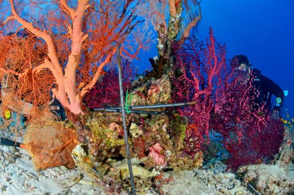 metal frame to fix broken sea fan at similan island 9